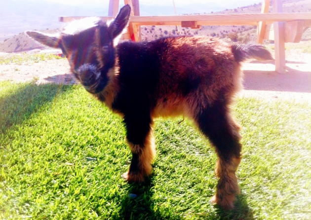 Caris' doeling- AVAILABLE